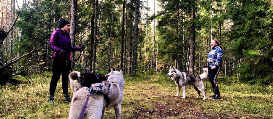 Voyage Russie - Husky, dog trekking à Saint Pétersbourg